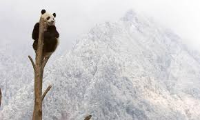 Ten <b>Interesting</b> Facts about Giant <b>Pandas</b> | Blog Posts | WWF