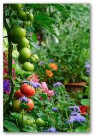 Growing Tomatoes In Pots And In ContainersContainer Garden Plans Tomatoes