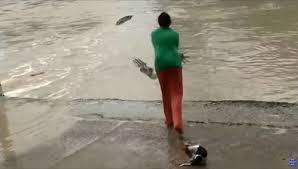 Женщина прогнала крокодила с помощью <b>шлепанца</b> — Земля ...