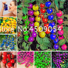 Aliexpress.com : Buy Hot Sale! <b>50 Pcs</b> Rainbow Tomato Plant ...