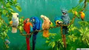 colorful birds in a tree branch ...