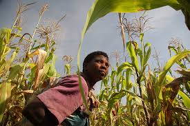 Closing the gender gap in agriculture: Which way, Africa? | YPARD ...