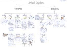 Vertebrate Phyla Chart Classification Of Animals Vertebrates And Invertebrates