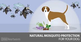 natural mosquito repellents dogs