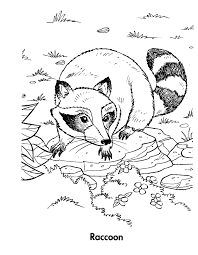 Small Picture Printable Raccoon Coloring Pages Coloring Me