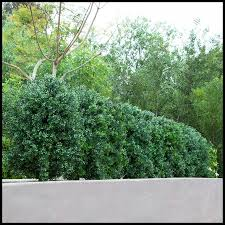 Outdoor Faux Boxwood Shrubs Artificial Plants Unlimited