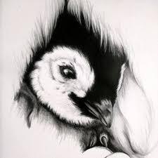 baby penguin drawing in pencil. Brilliant Penguin Baby Penguin Sketch Intended Penguin Drawing In Pencil T
