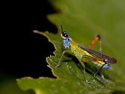 Böcek İlaçlama Şirketleri Kartal