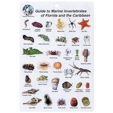 Caribbean Of Invertebrates I amp; Florida Marine Card d