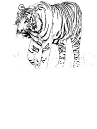 Small Picture A Realistic Drawing of Bengal Tiger Coloring Page Download