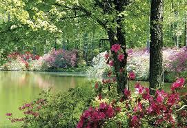 azalea season at callaway gardens