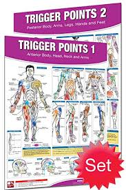 Trigger Points Foot Chart Amazon Com Productive Fitness Laminated Fitness Poster