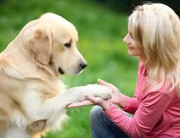 Image result for dog pets