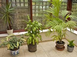 Pflanzen Im Schlafzimmer Gesund Mit Diesen Zimmerpflanzen Schlafen