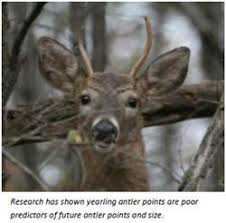 Deer Antler Age Chart Antler Restrictions Are They Working