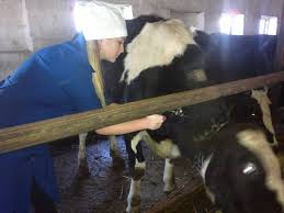 Отчет о практике студента ветеринара Стихи о сельском  Отчет о практике студента ветеринара
