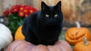 Black Cat Halloween pumpkins jack-o ...
