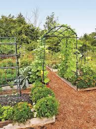 designing a productive vegetable garden