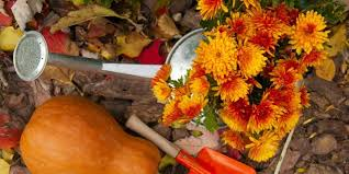 The Fast Start Guide To Fall Survival Gardening Part IFall Gardening