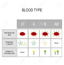 Blood Groups Chart There Are Four Basic Blood Types Made Up