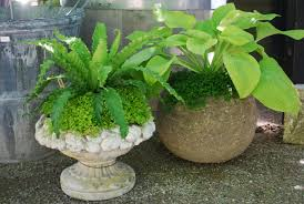 shade loving outdoor container plants designs