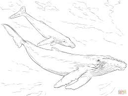 Small Picture Humpback Whales coloring page Free Printable Coloring Pages