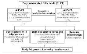 Hypothesis Omega 6 To Omega 3 Ratio Increases Obesity