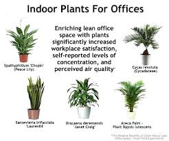 feng shui plant office. Plants For The Office Indoor Offices Interiors Feng Shui . Plant