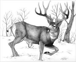 Deer Drawings 24 Free Deer Drawings Designs Free Premium Templates