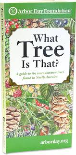 What Tree Is That Tree Identification Guide At Arborday Org