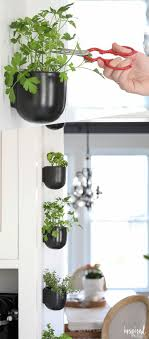 Herb Garden Kitchen 1000 Ideas About Kitchen Herb Gardens On Pinterest Herb Garden