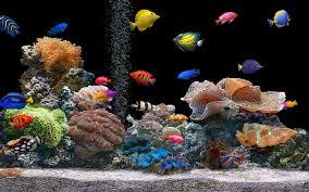 High Resolution Fish Tank Aquarium Wallpaper for Desktop Full Size .
