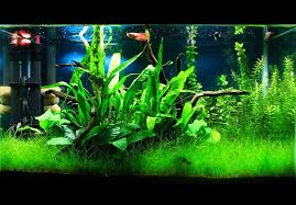 how to setup a low tech planted tank planted aquarium guide