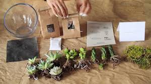 what s in a diy succulent terrarium kit from juicykits com you