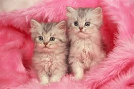 cute cats hd desktop wallpapers for pets loves free