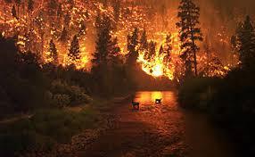 Лесной пожар Википедия Лесной пожар бушующий в долине реки Биттеррут в штате Монтана