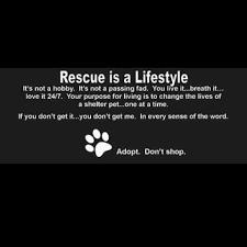 Rescue Always Rescue Animal Rescue Quotes Animal Rescue Quotes