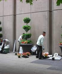 Office Plants Service Living Walls Botanical Designs