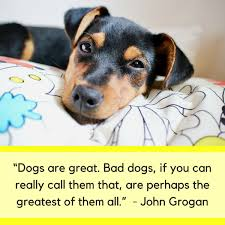 Funny Dog Quotes Inspiration 48 Cute Funny Dog Quotes Puppy Leaks