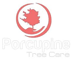 <b>Porcupine Tree</b> Care
