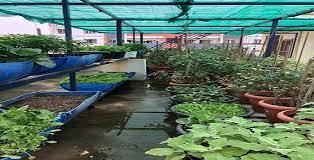 an organic kitchen garden