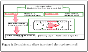 zetasizer technique in biochemistry omics international biochemistry analytical biochemistry electrokinetic