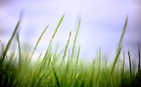 green grass field animated. Animated 182577 182577. SHARE. TAGS: Field Branches Grass Green T