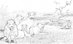 Small Picture Free Lion Coloring Pages