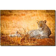on leopard metal wall art with leopard metal print wall art stephen w oachs chui