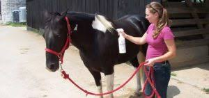 best fly spray for horses reviews