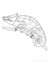 Chameleon Coloring Page Chameleon Coloring Page Marker Pages