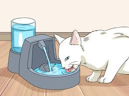 Cat Stool Chart How To Identify Cat Stool Problems 9 Steps With Pictures