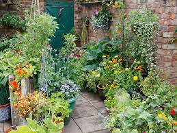 The 25 Best Winter Container Gardening Ideas On Pinterest Container Garden Ideas Uk