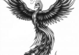 Phoenix Bird Drawings In Pencil Pencil Drawing Pictures Of Birds At